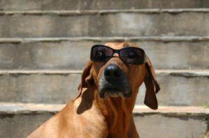 Dr. K's Dog